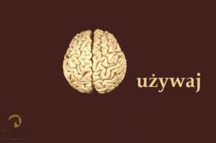 Mózg – używaj!