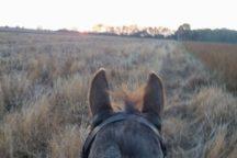 Na odblokowanie spiętego grzbietu – dłuuuugi galop w terenie :)