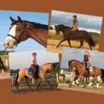 Konie w treningu 2019