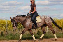 Jechać konia od tyłu do przodu