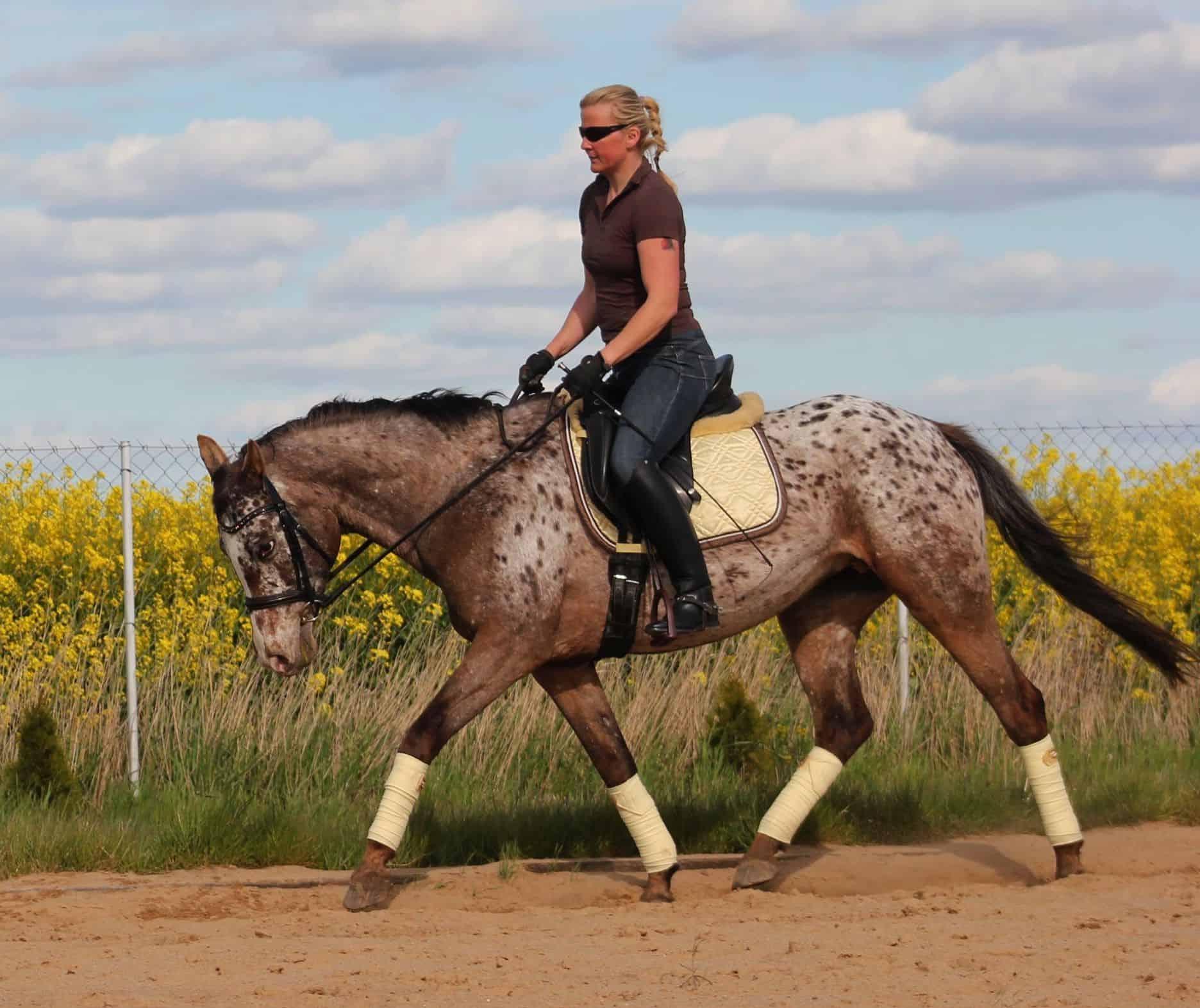 Co każdy jeździec powinien czuć z siodła i widzieć z ziemi