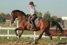 Mieć konia przed łydką